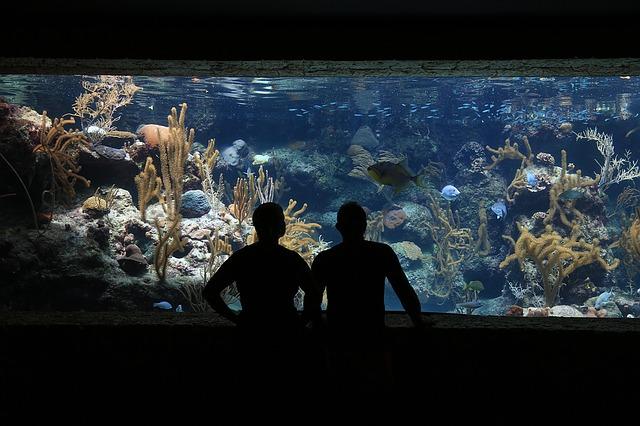 refrigeración acuario